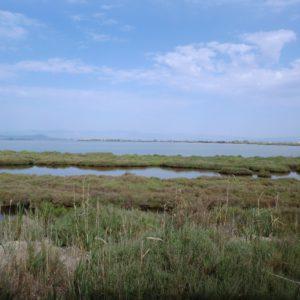 Laguna de l'Encanyissada1