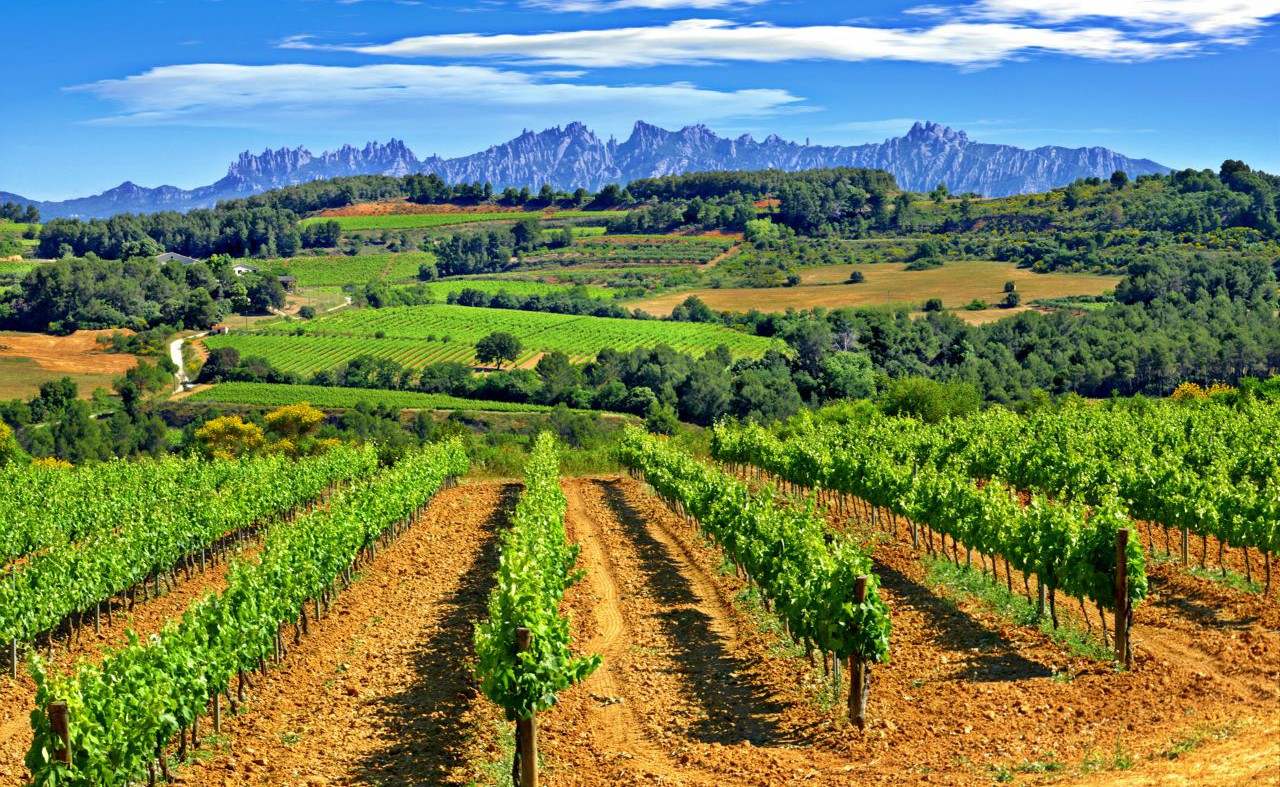 The Penedès as location for your audiovisual production or photographic shooting