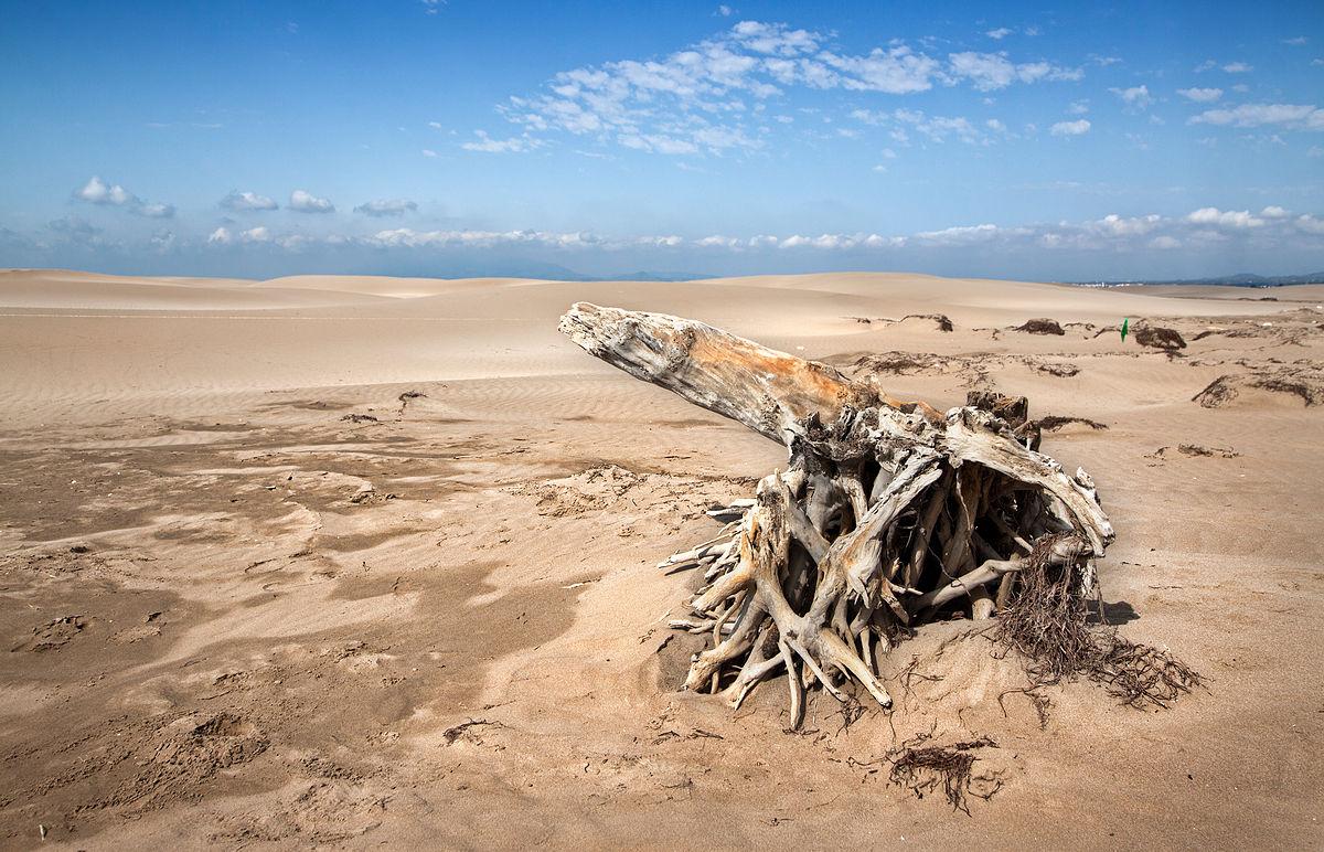 Playa del Fangar